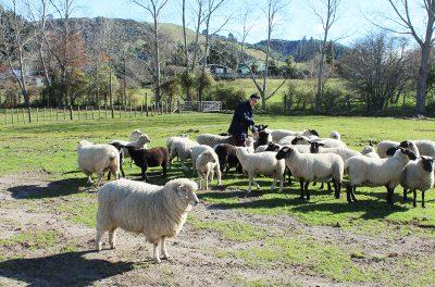 Rotorua_TheFarmTour_image12