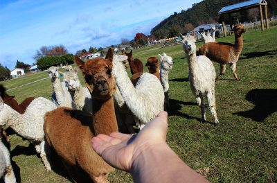 Rotorua_TheFarmTour_image15