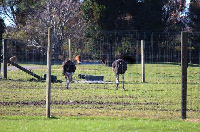 Rotorua_TheFarmTour_image8