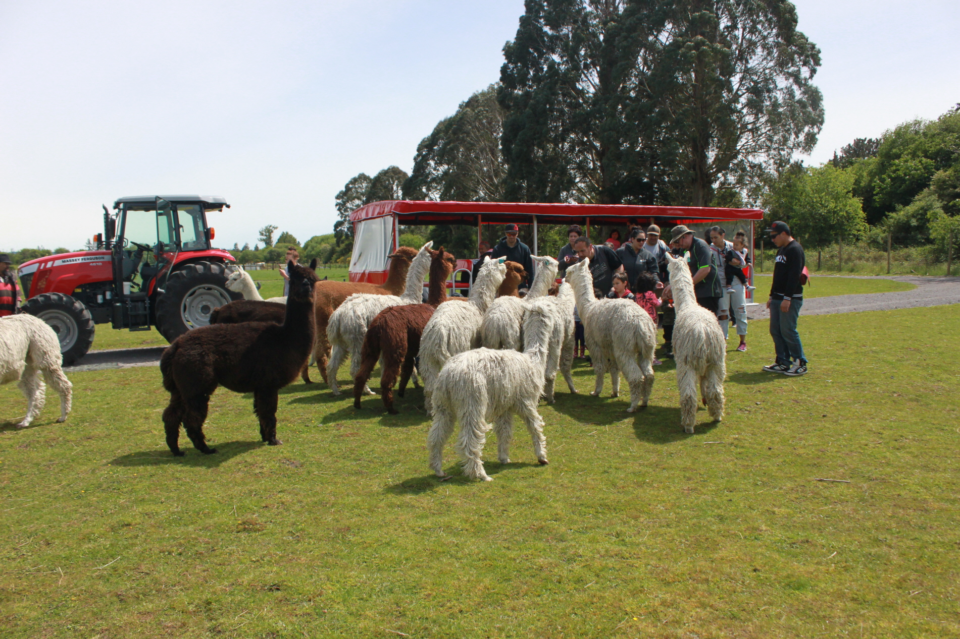 Join an hour long guided NZ farm tour in a comfort trailer.